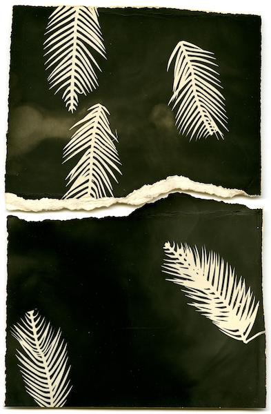 Bruno V. Roels - Palmograph #1, 2019
