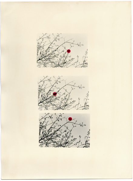 Bruno V. Roels - A Guide To Cherry Blossoms (The Scarlet Dots), 2019