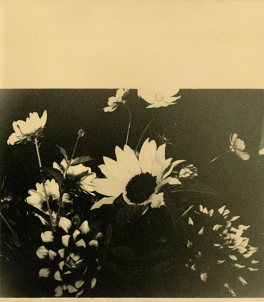 Bruno V. Roels - Untitled (Square Of Flowers), 2020
