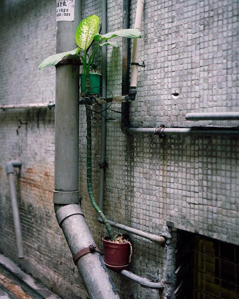 Michael Wolf - # 2, Hong Kong Flora, 2014