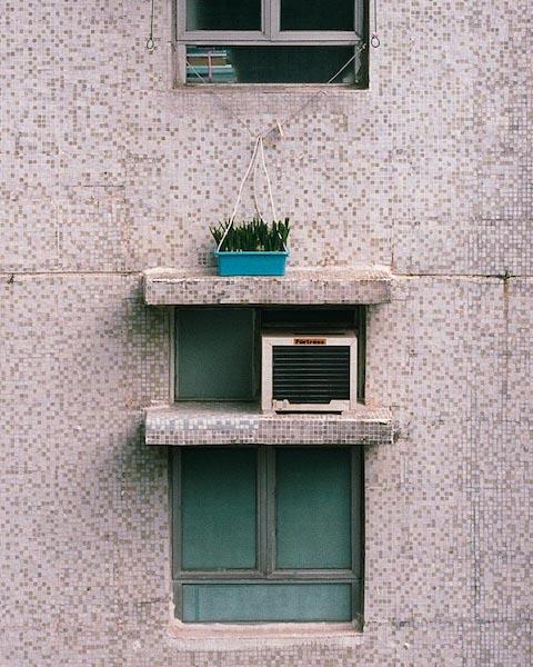 Michael Wolf - # 4, Hong Kong Flora, 2014
