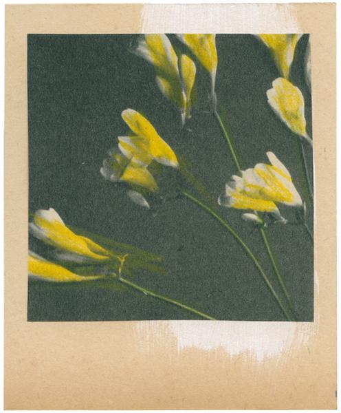 Katrien De Blauwer - Fake polaroids (10), 29.08.2019