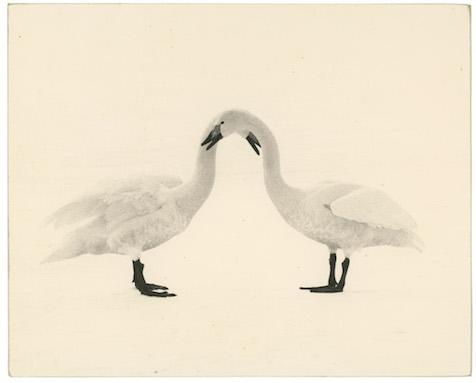 Masao Yamamoto - #1658, Kawa = Flow, n.d.