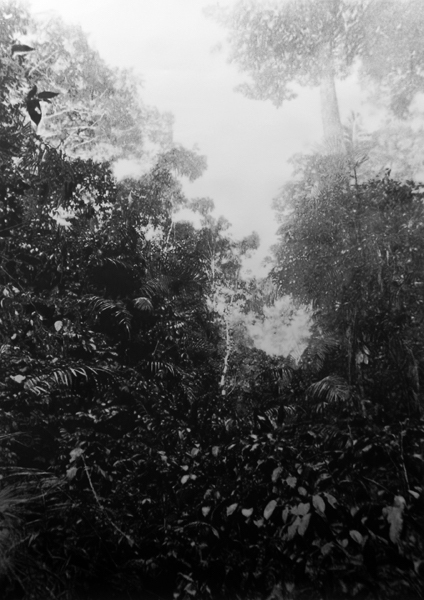 Eric Manigaud - Jungle#3 la forêt pres de Zaranou, de la série Les Jungles, 2008