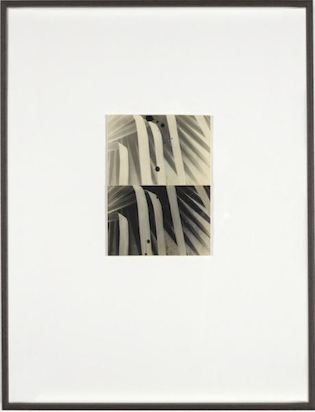 Bruno V. Roels - A Palm Tree Is A Palm Tree Is A Palm Tree (Cascades), 2016