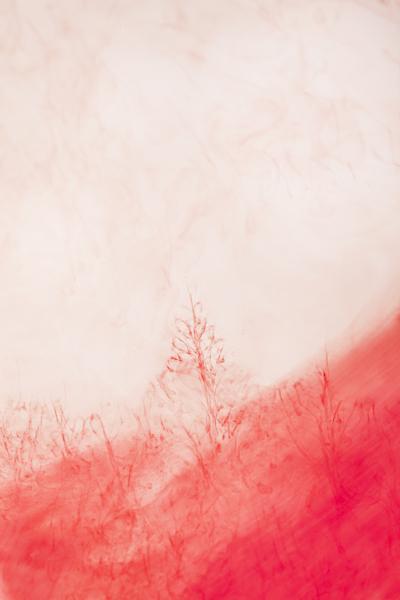 Elinor Carucci - Red #1, 2014