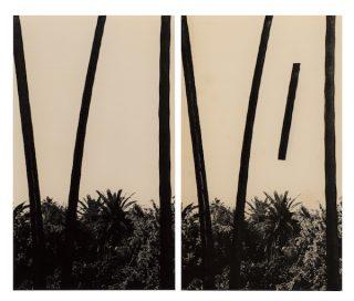 Bruno V. Roels - Stalks (6 1/2), 2015