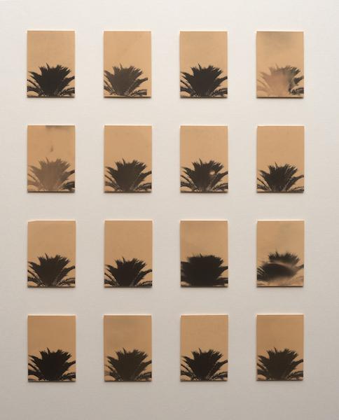 Bruno V. Roels - 16 Trees, 2021