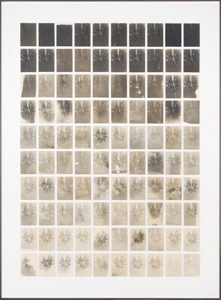 Bruno V. Roels - A Palm Tree Is A Palm Tree Is A Palm Tree, 2021