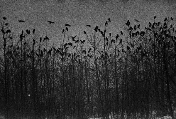 Masahisa Fukase - Nayoro, 1976