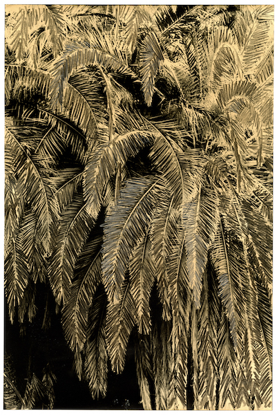 Bruno V. Roels - Getting Rid Of Palm Trees (Penciling In Negative Space) #2, 2021